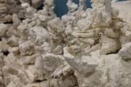 Styrofoam Coral